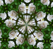 Soft White Rose Kaleidoscope by SmilinEyes