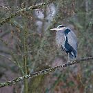 Heron Perch by David Friederich