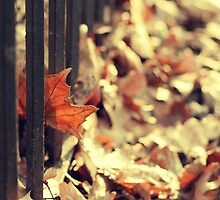 Remnants of Autumn by ShereenM
