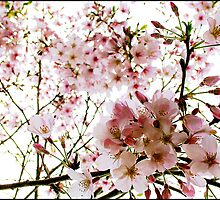 Blossoms en Masse by AlisonOneL