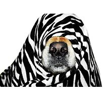 Guess Who! (Molly as zebra) Photographic Print
