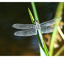 Dragonfly Complete Photographic Print