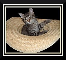 Cat in a Hat by Jan  Tribe