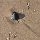 Shell and Tracks by John Wright