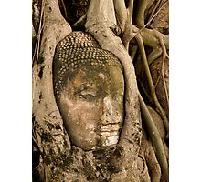 Budda Head in Roots Photographic Print