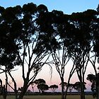 Among The Gum Trees by AlisonOneL