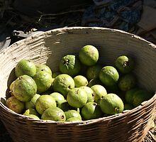 A basket full of green, fresh guavas by ashishagarwal74