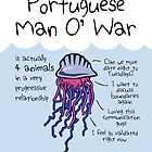 Portuguese Man O' War Is Actually 4 Animals In A Very Progressive Relationship by jezkemp