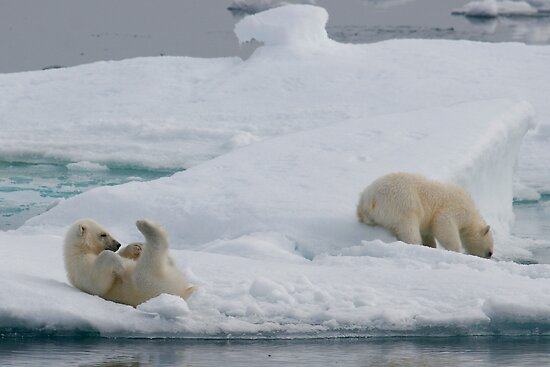 Polar Play Time by Steve Bulford