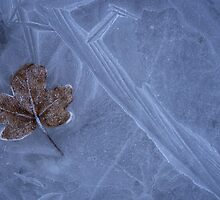 Frozen Leaf On Ice by pusztafia