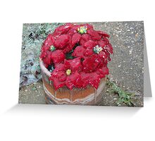 Poinsettia covered in Ice Greeting Card