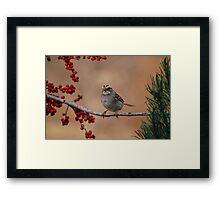 White-Throated Sparrow (Zonotrichia albicollis) Framed Print