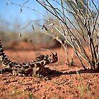 Thorny Devil, Uluru - Kata Tjuta National Park, NT by Matt  Lauder