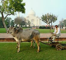 Taj Lawnmower by Jeff Barnard