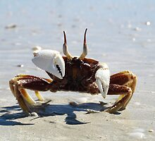Cable Beach Ghost Crab by Richard Cassar