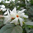 Beautiful white flower with orange center by ashishagarwal74