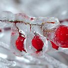 ICE, ICE, BERRY by clou2