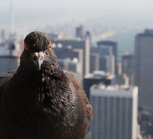 Atop the Empire State Building by Michael Lampard