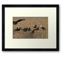 Eagle and the buzzards Framed Print