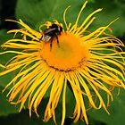 bee cushion by beemba