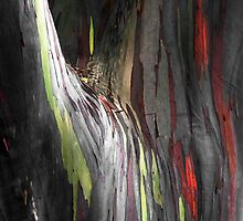 Rainbow Eucalyptus by J. Sprink