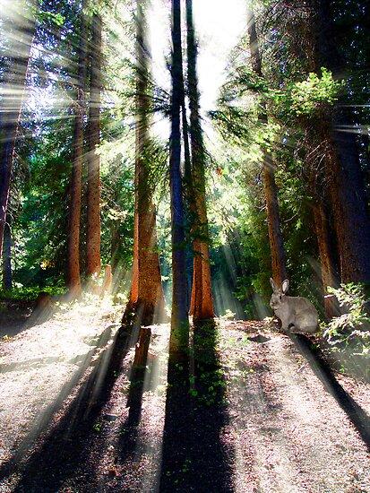 Heavenly Lighting by digitalmidge