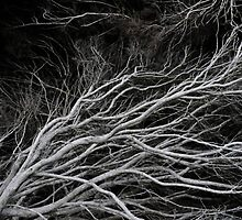 Twisting Branches by Lindsay Dean