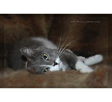 Furry Cat © Vicki Ferrari Photographic Print