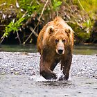 Ursos Arctos, The Great Brown Bear of Kodiak, Alaska by Albert Dickson