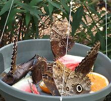 Butterflies Feasting by Candace M. Thompson