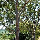 Trees by the Roadside on the Greek Island of Crete. by John (Mike)  Dobson