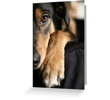 Day Dreams by Tucker Greeting Card
