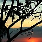Sunset and bird-silhouette by jimmy hoffman