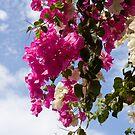 Hanging Flowers by Igor Janicijevic