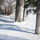 Winter Shadows by Shelby  Stalnaker Bortone