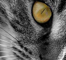 Goldeneye by Rachel81