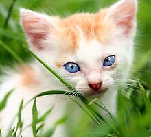 Adorable kitty in grass by naturalis