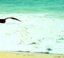 Summer beach photography print, green ocean waves golden sand soaring flying bird, Los Cabos Mexico travel photography, wall art home decor Sticker