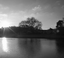Winter Sun by Paul Revans