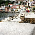 Cat sunbaking, Parga, Greece by gumblossom