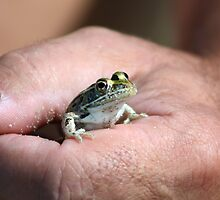 Adorable Little Froggie by Teresa Zieba