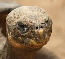 Galapagos by Steve Bullock