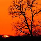 Tree at Sunset by lorilee