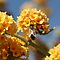 Bee on Buddleia by Margot Kiesskalt