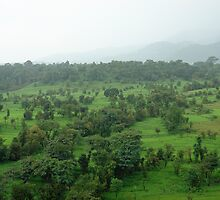 A beautiful green countryside, part of the Kangra Hills by ashishagarwal74