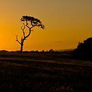 Phillip Island Sunset by Igor Janicijevic