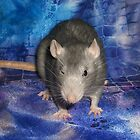 Blue rat on blue. And blinking the eye... ;) by KanaShow