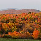 Peak Foliage - Vermont by Stephen Beattie