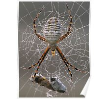 Dewy Spider  Poster