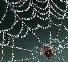 Pearls of Dew by Bill Spengler